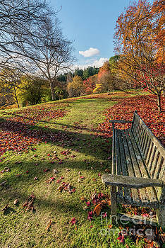 Autumn Leaves by Adrian Evans