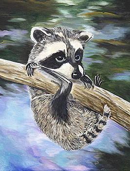Baby Raccoon by Sue Ervin