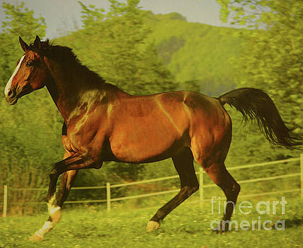 Beautiful Horse  by Ruth Housley