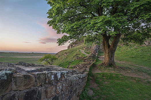 Beautiful landscape image of Sycamore Gap at Hadrian's Wall in N by Matthew Gibson