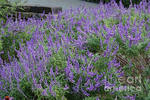 Beautiful Purple Flowers  by Ruth Housley