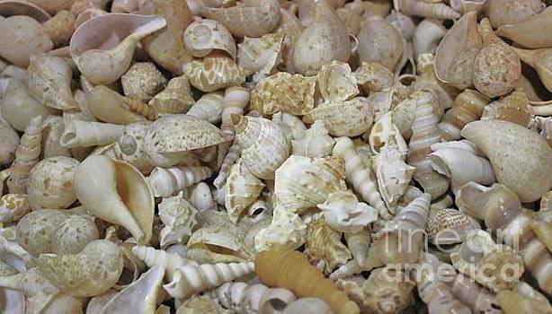 Paulette Thomas - Beautiful Sea Shells