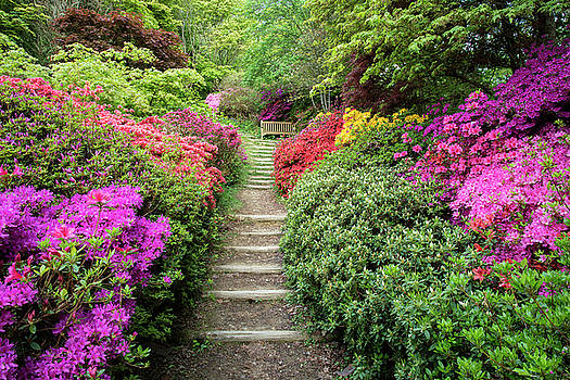 Beautiful vibrant landscape image of footpath border by Azalea f by Matthew Gibson