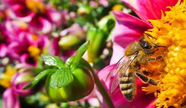 Bee by Cesar Vieira
