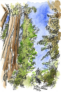 California Redwoods by Lynn Takacs