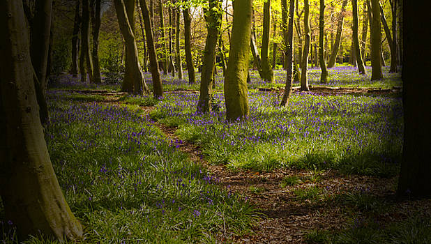 David French - Chalet Bluebell Woods