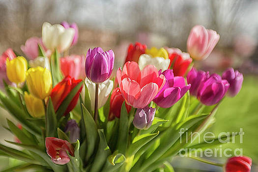 Patricia Hofmeester - Colorful tulips