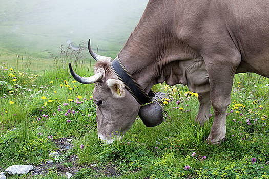 Aivar Mikko - Cow with Bell