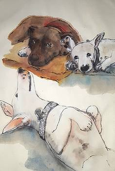 Dogs Dogs  Dogs album by Debbi Saccomanno Chan