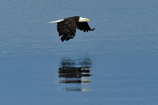 Eagle by Christian Heeb