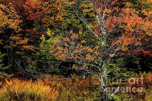 Fall Color West Virginia  by Thomas R Fletcher