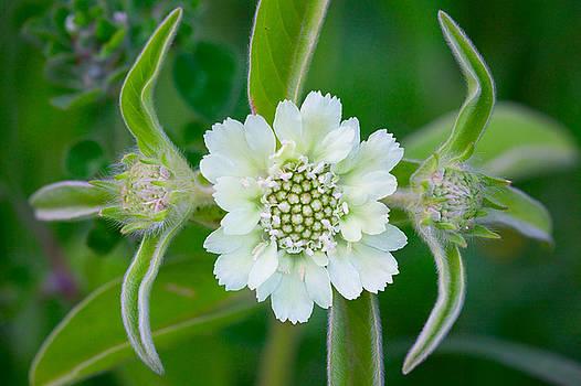 Yuri Peress - Flower