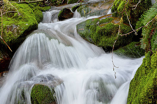 Flowing Creek by David Crockett