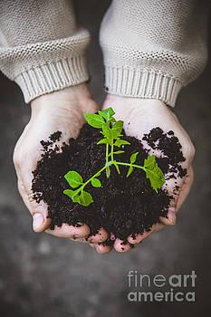 Garden seedling in farmer's hands by Mythja Photography