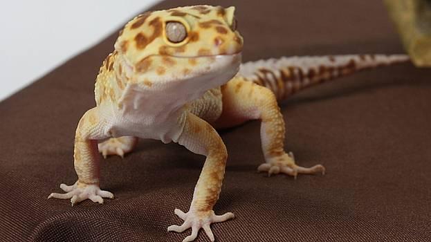 Gecko by Dorothy Binder