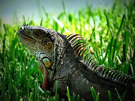 Green Iguana by Ines  Ganteaume