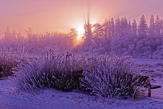 hoar frost Sunrise by Darcy Michaelchuk