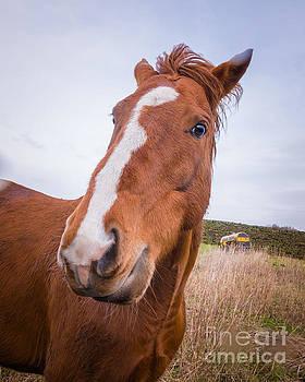 Mariusz Talarek - Horse