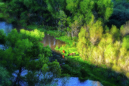 3 Horses grazing on the bank of the Verde River by Robert FERD Frank