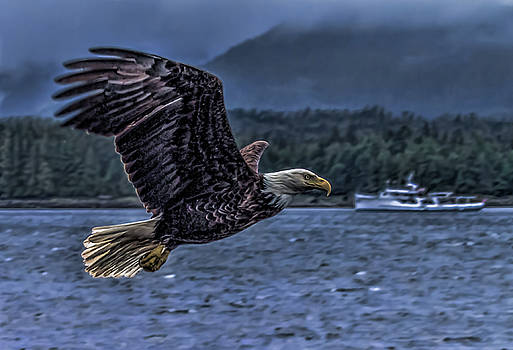 In Flight. by Timothy Latta