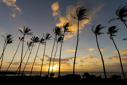 Kauai Mornings by Peter Irwindale