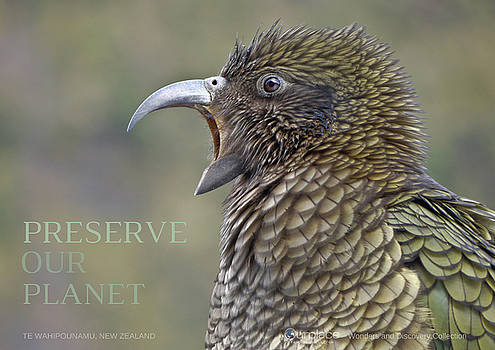 Kea, Te Wahipounamu, New Zealand by OurPlace World Heritage