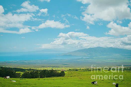 Kula Maui Hawaii by Sharon Mau