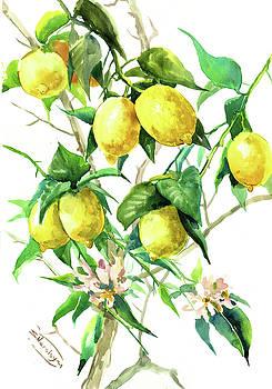 Lemon Tree by Suren Nersisyan