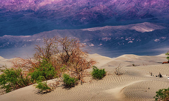 Mike Penney - Mesquite Sand Dunes
