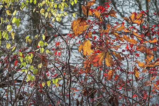 Morning Fall Trees by Steve Konya II