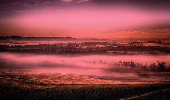 Morning Fog by Pixabay