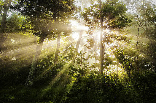 Morning Rays by Andrew Soundarajan