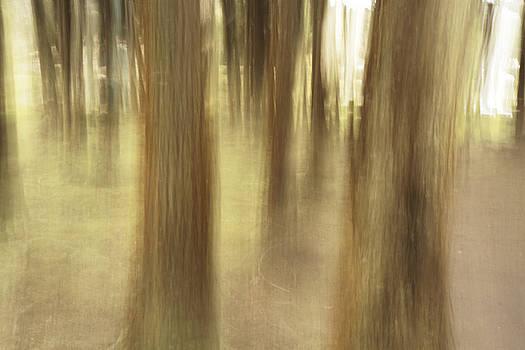 Gaspar Avila - Nature abstract