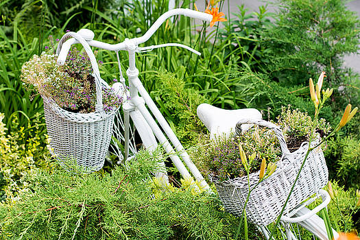 Newnow Photography By Vera Cepic - Old bicycle ideas for gardening