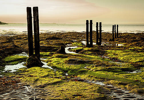 Old Mooring Posts. by John Cox
