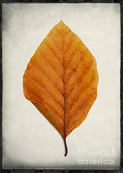 BERNARD JAUBERT - One leaf in studio.