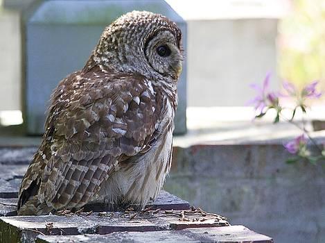 Paulette Thomas - Owl
