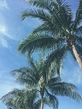 Palm Trees by Cortney Herron
