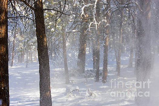 Steve Krull - Pike National Forest Snow