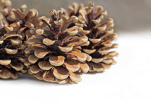3 Pine Cones by Susan Wall