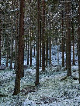 Pines by Jouko Lehto