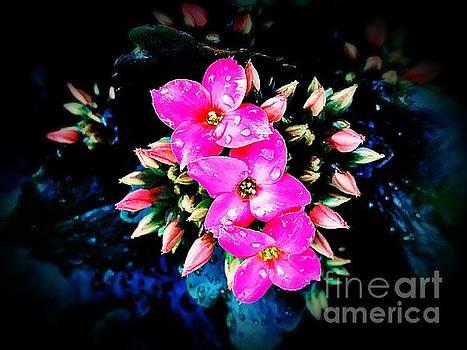 3 Pink Flowers by JB Thomas