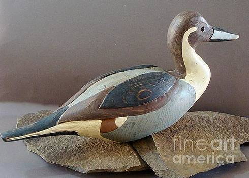 Pintail  by Bruce Peterson