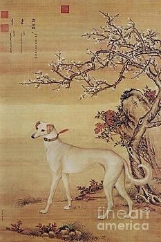 Prized Dog Chinese Greyhound by Giuseppe Castiglione