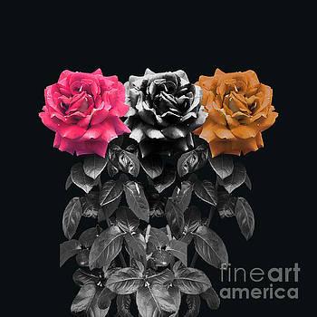 3 Roses by Cesar Padilla