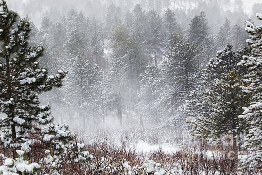 Steve Krull - Snowstorm in the Pike National Forest