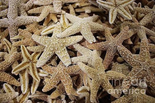 Paulette Thomas - Star Fish