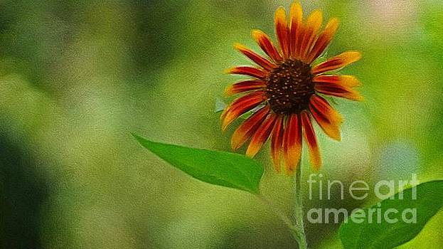 Summer Sunflower  by Paul Wilford