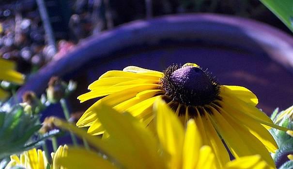 Sun Glory Series by Marika Evanson