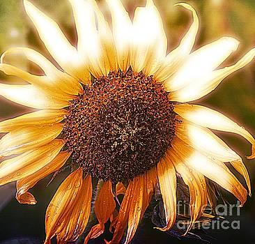 Sunflower by Janice Spivey